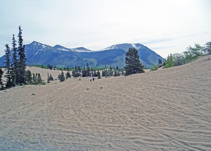 Carcross Desert.  Carcross Desert is commonly referred to as a desert, but is actually a series of northern sand dunes. The area's climate is too humid to be considered a true desert.  The sand was formed during the last ice age, when large glacial lakes formed and deposited silt. When the lakes dried, the dunes were left behind.