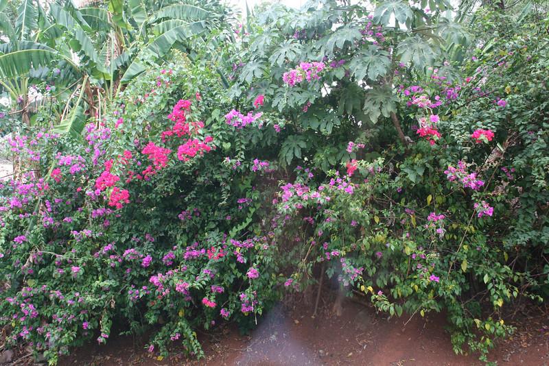 Beautiful flowers along the way
