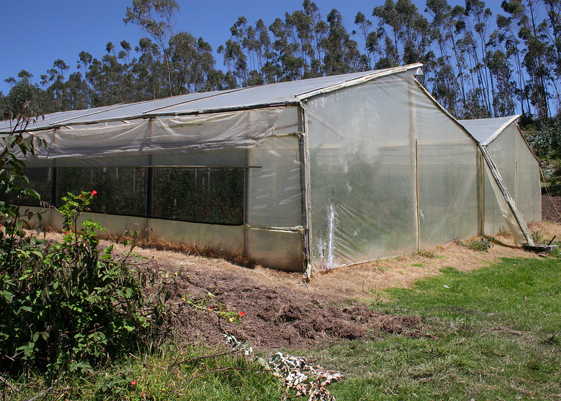 Greenhouse on the Ali Shungu Mountaintop Resort.