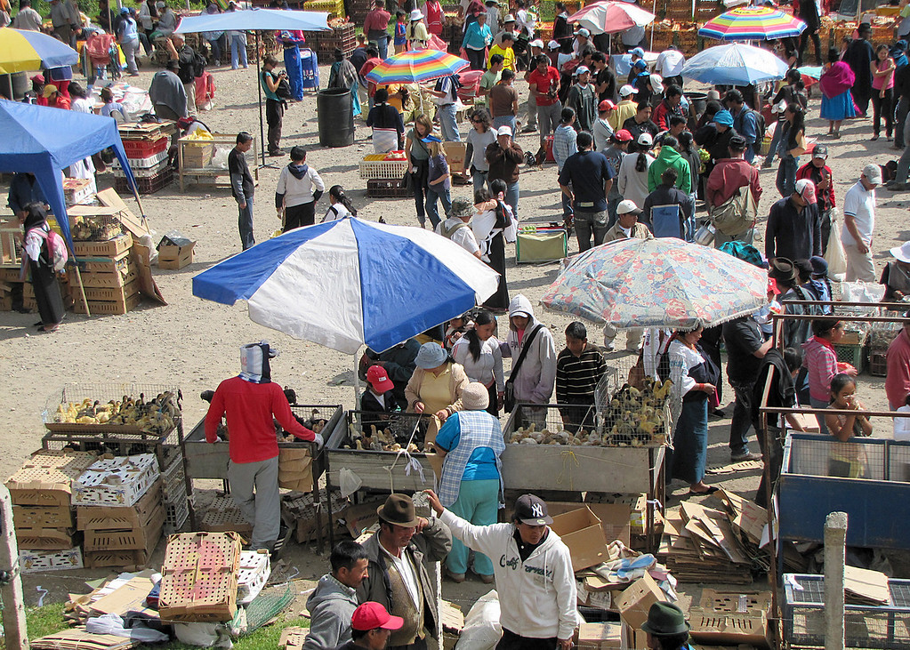 Overview of the animal market