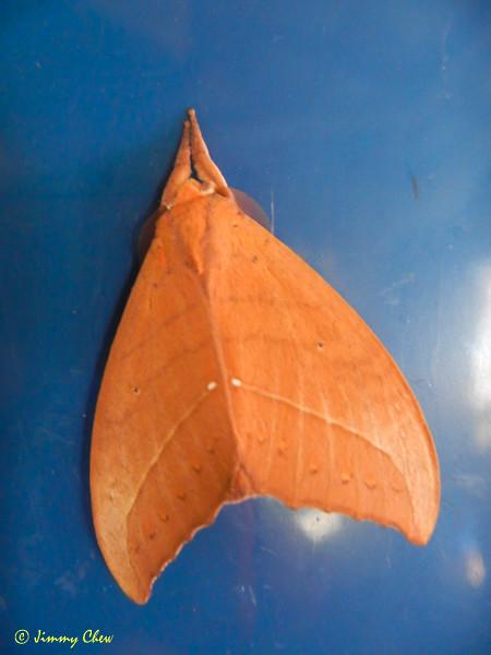 Nice moth!