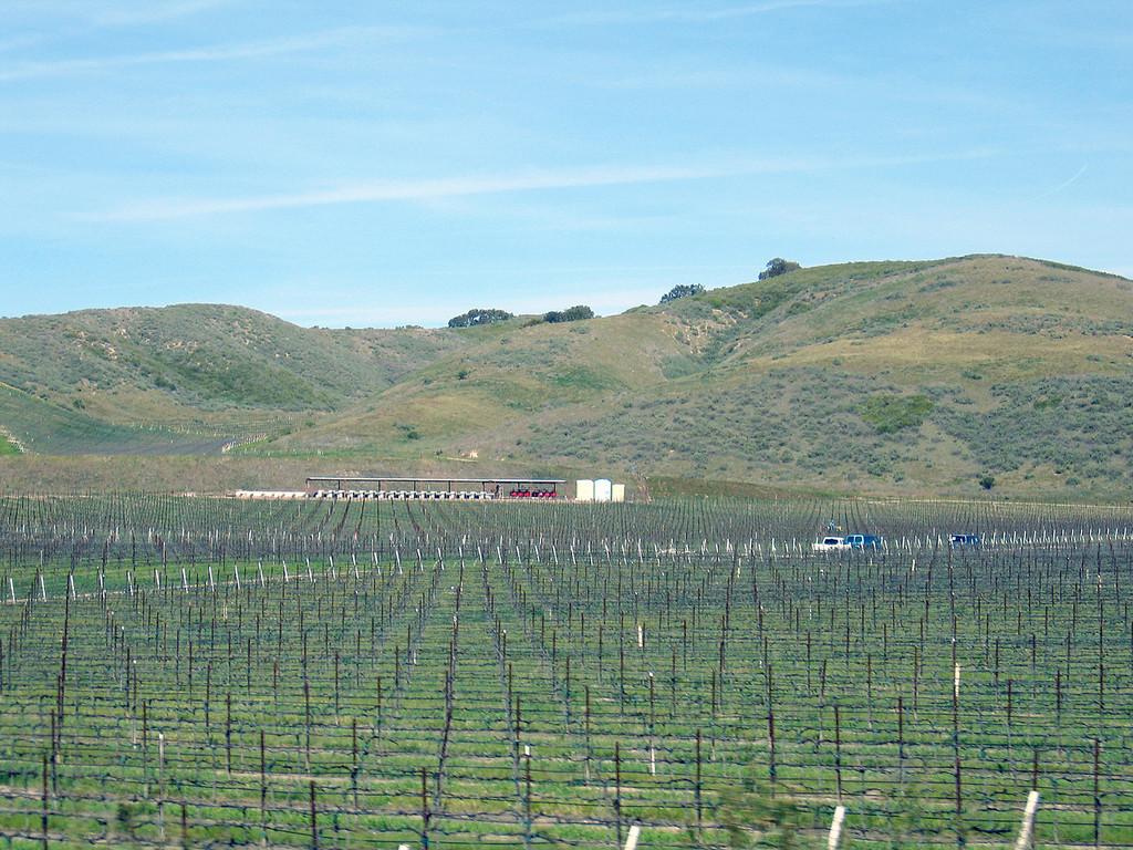 Vineyard between Los Alamos, CA and Paso Robles, CA