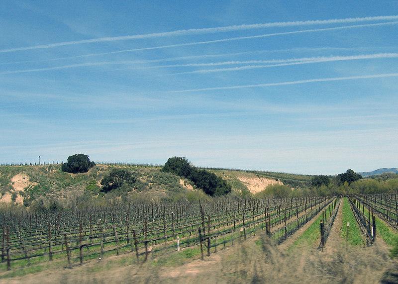 Vineyard between Cachuma Lake turnoff and Paso Robles, CA