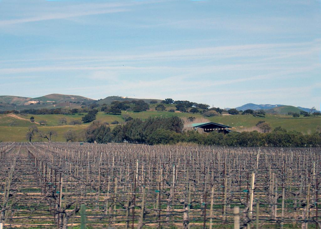 Vineyard at Los Alamos, CA