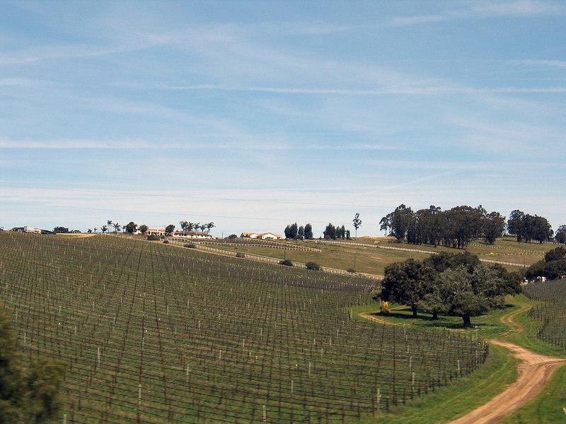 Vineyard at Santa Maria, CA