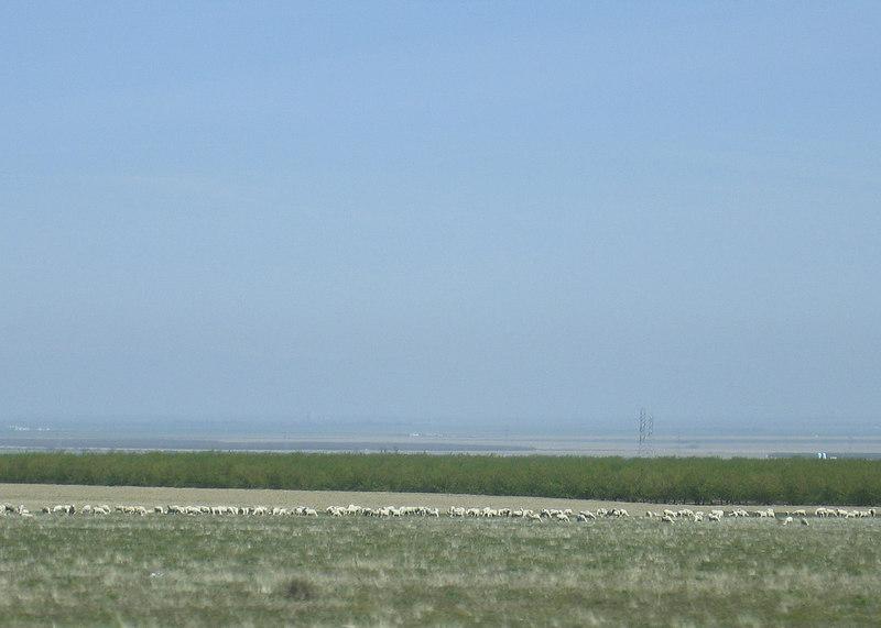 Between Avenal, CA and Santa Nella, CA