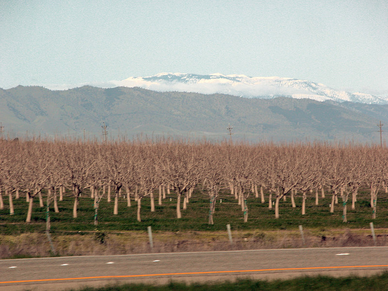 Orchard and snow capped mountains in distance