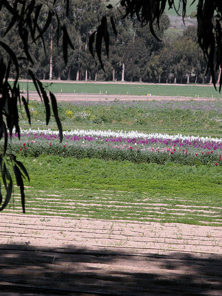 Directly across the street from the RV park is this beautiful field of flowers