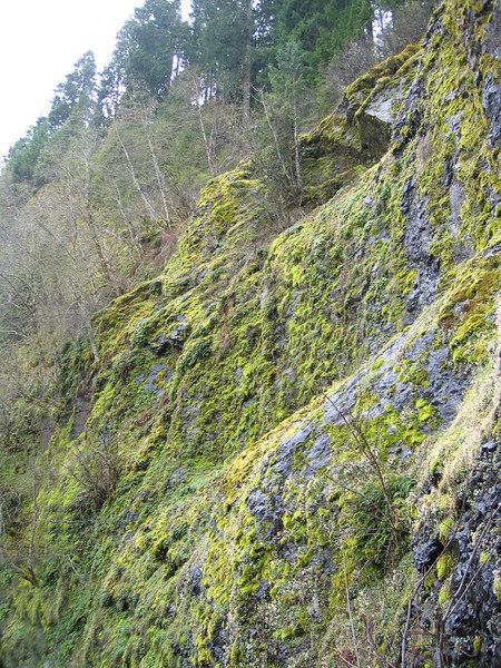 Yellow lichen near Cougar Dam