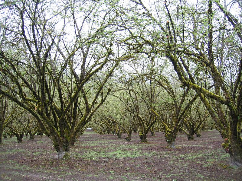 Orchard as we enter Hilfrich Park