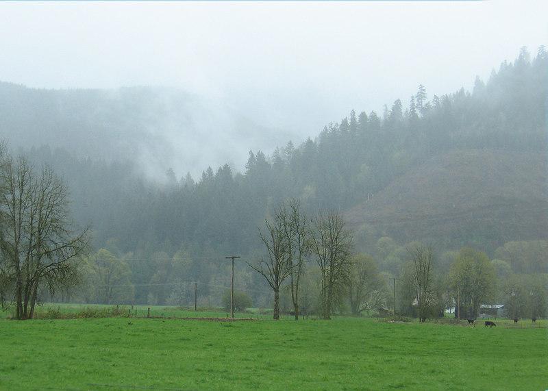 Mist along the McKenzie River drive