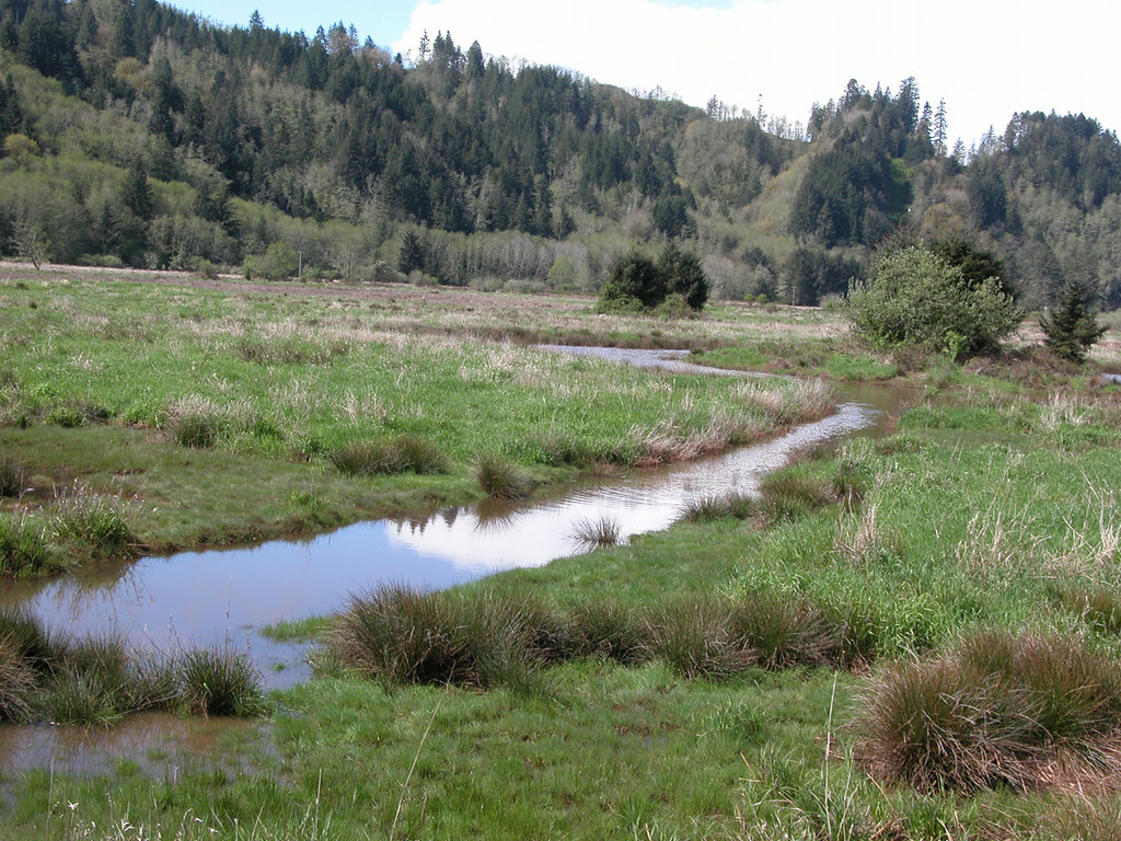 Wetland at  the Dean Creek Elk Viewing Area just outside of Reedsport, OR