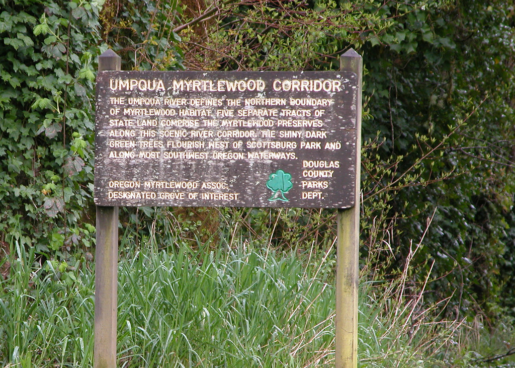 Sign at Scottsburg park about the Myrtlewood trees