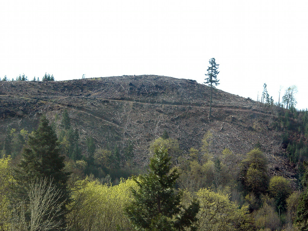 Clear cut hill along Route 38 heading west towards Reedsport