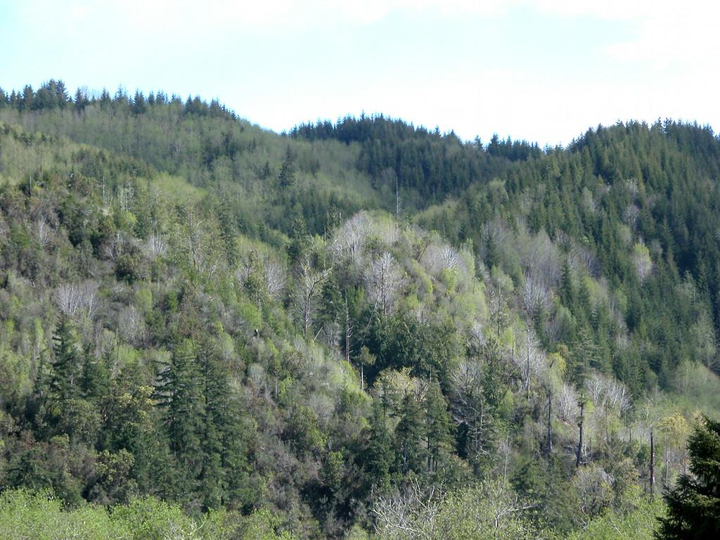 Hillside at the Dean Creek Elk Viewing Area just outside of Reedsport, OR