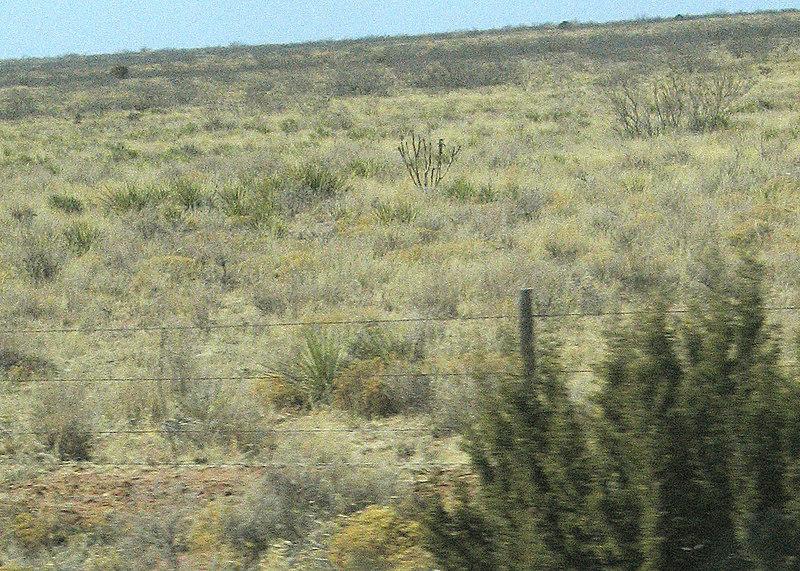Desert outside Logan, NM