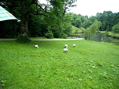 Swans at the castle Linderhof.