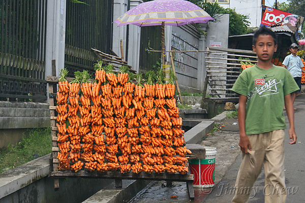 "<font color=""yellow"">Carrots for the animals.</font><br>"