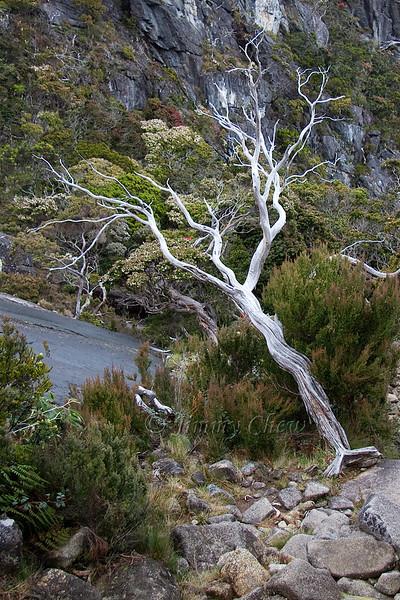 A petrified tree?