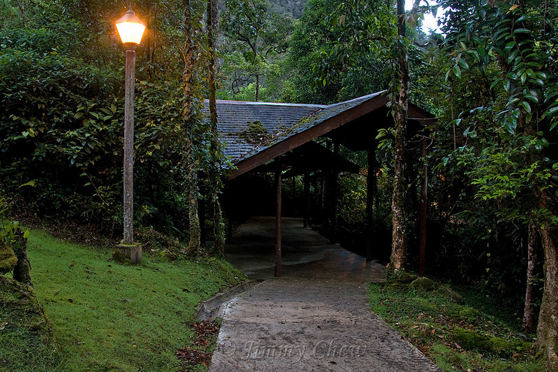 Mesilau resort walkway.