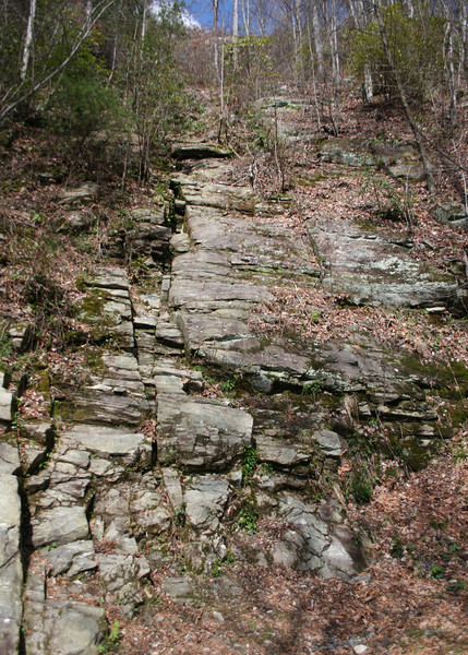 Along path to Whitewater Falls, Cashiers. NC
