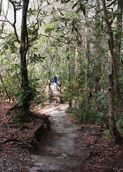 The path to Silver Run Falls, Cashiers, NC