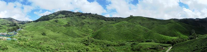 tea_plantation copy 2