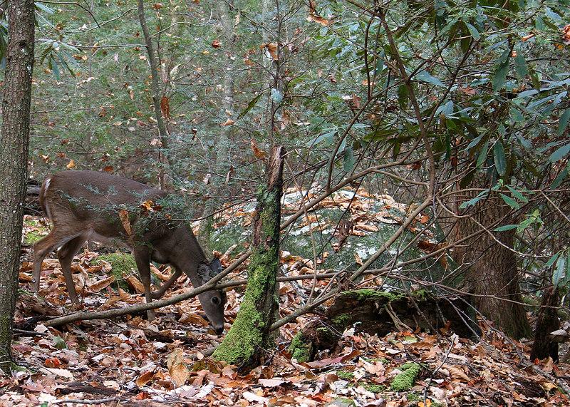 Deer along nature trail at Ogle farm