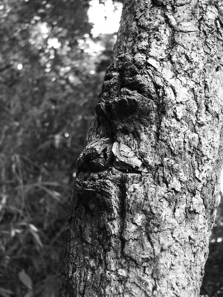 """<font color=""""yellow"""">Spooky face on a tree.</font><br>"""