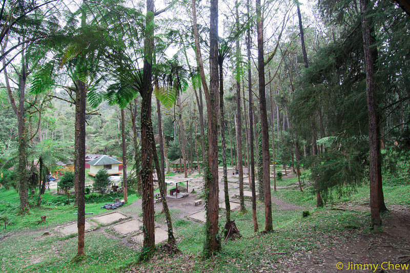 More trees at the higher camping ground.