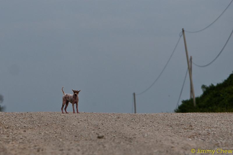 Stray dog on horizon.
