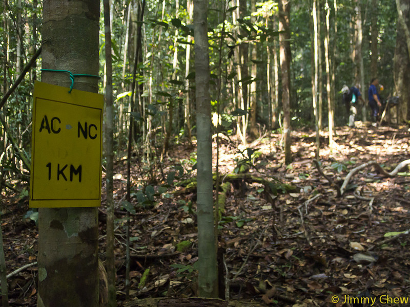 Distance markers are provided along the trails. This one means 1 km walked from Agathis Camp towards Nepenthes Camp.