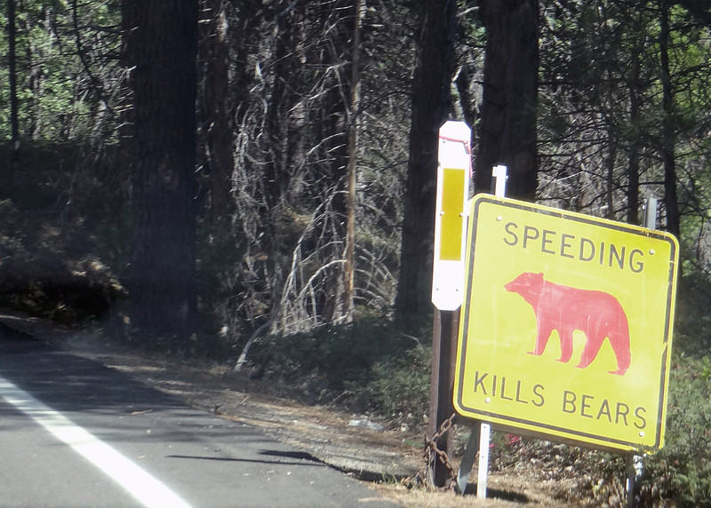 Whenever a bear is killed by a car one of these signs is place at the spot the bear was killed as a reminder to all to drive safely