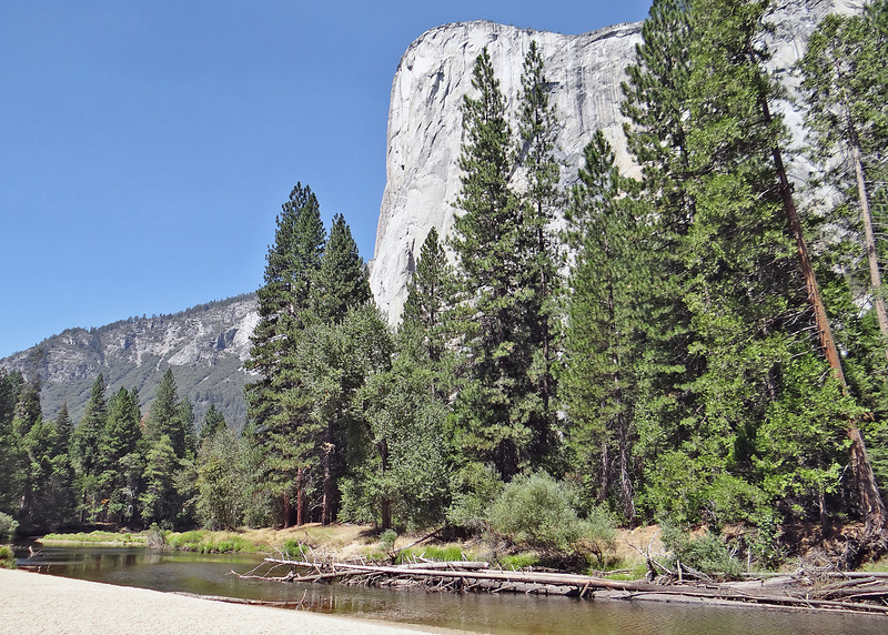 El Capitan from Cathedral Picnic area