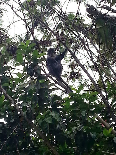 A monkey in the tree