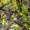 Oregon_Ridgefield_09 12-839