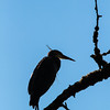 Oregon_Ridgefield_09 12-879
