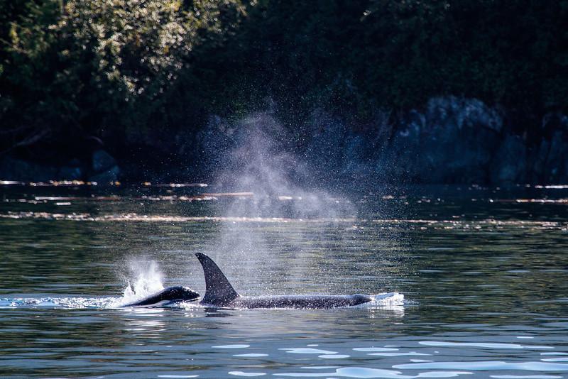 VancouverIsland_090513_1901