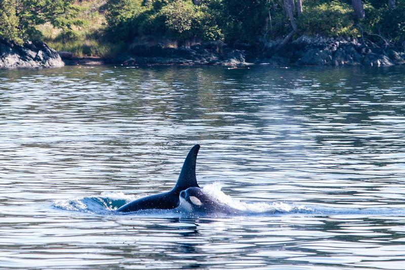 VancouverIsland_090513_1802