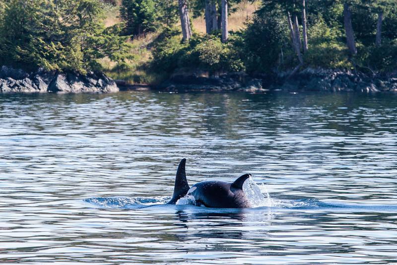 VancouverIsland_090513_1803