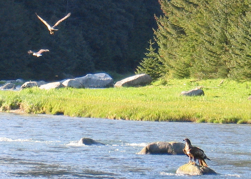 Eagles flying and on rock