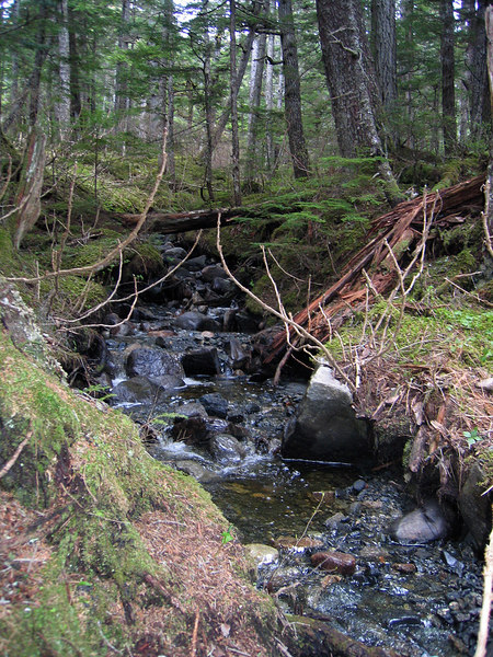 One of many streams along trail