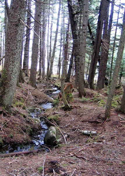 Little stream along trail