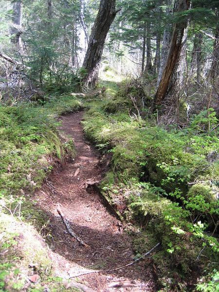 Path amongst the trees
