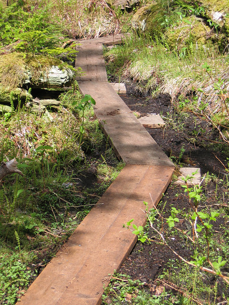 Wooden walkway through the forest