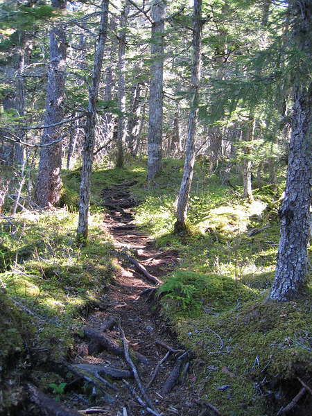 Path in for Mt. Riley hike