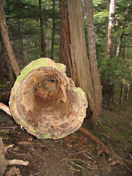 Nature hollowed out this tree