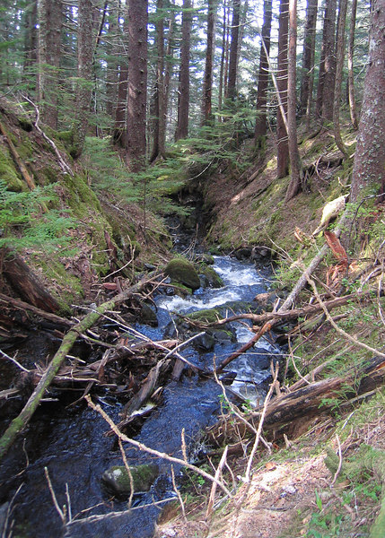 Another of the several creeks we passed