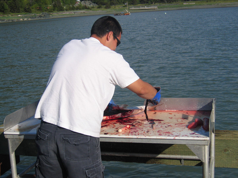 Cleaning the salmon