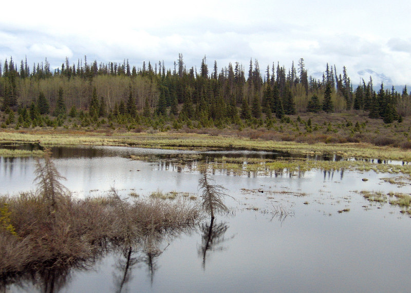 Jarvis River